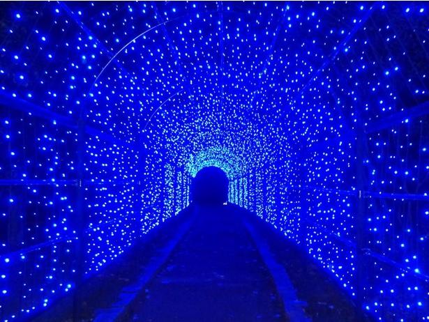 【写真】花の展示温室周辺に設置される青い光のトンネル