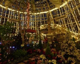 花とイルミネーションのコラボ、福井県の福井県総合グリーンセンターで「花の展示温室イルミネーション」が開催中