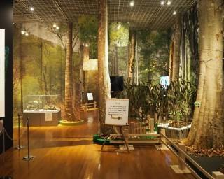 ブナの魅力を体感、茨城県坂東市で「いのち育むブナの森 森のぬくもり、もりだくさん!」が開催中