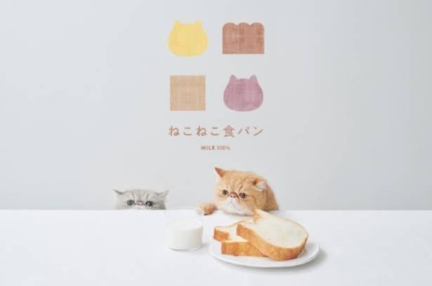 今話題の高級食パン専門店「ねこねこ食パン」