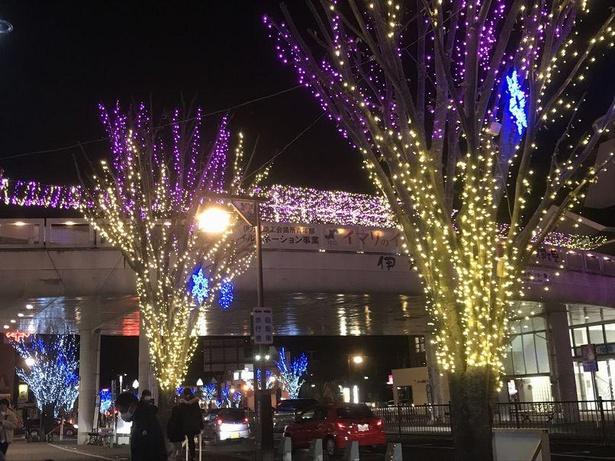 駅前のケヤキの街路樹やロータリーの楠の木が色鮮やかにライトアップ