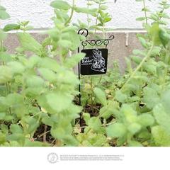 「ガーデンピック」を使えば、どんな植物もイングリッシュガーデン風に