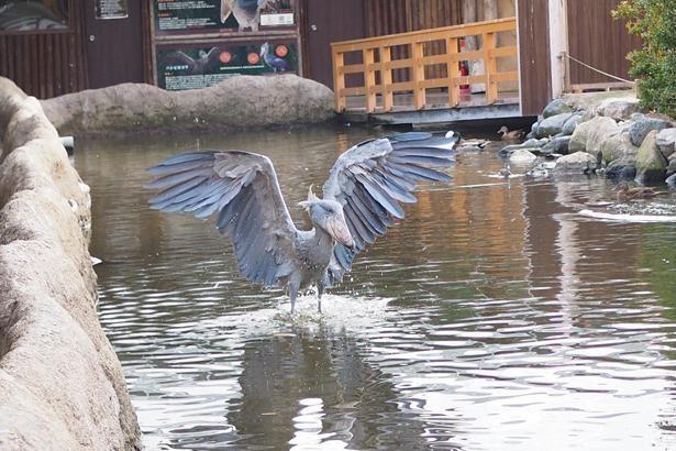 広げた羽が美しい。誇らしげな表情にも、心を揺さぶられる