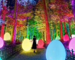 梅の名所が光のアート空間に変わる、茨城県の偕楽園で「チームラボ 偕楽園 光の祭」が開催