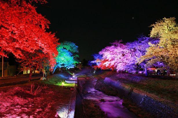 観音寺川の夜桜はレインボーカラーに