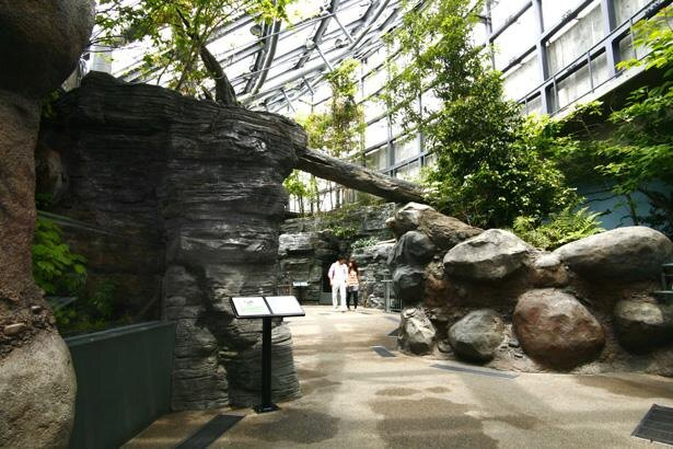 4階では長良川源流の自然環境を再現。光あふれる癒やしの空間が広がる