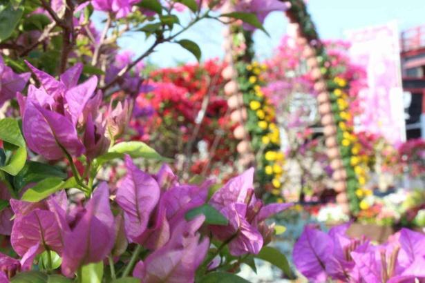 【写真】南国沖縄ならではの咲き誇る花々を見にいこう!