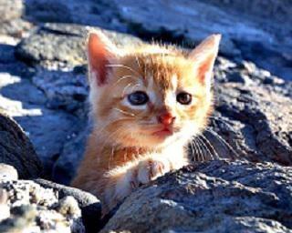 島の猫たちを撮り続けて10年、ボス猫とのほっこりエピソード