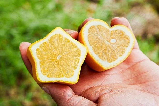 星型やハート型のレモン