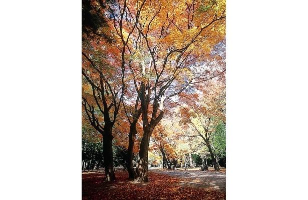 円山公園の周辺には立ち寄りスポットも多数あるぞ!
