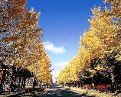 広大な園内で多彩な紅葉を満喫できる中島公園の秋