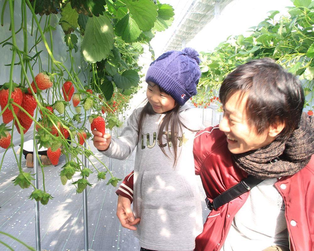 開放的な空間でいちごを堪能、三重県桑名市のナガシマファームで「いちご狩り」開催中