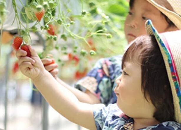 さまざまな野菜も取り扱う、BGMが流れる憩いのいちご園 / 所沢北田農園 苺のマルシェ