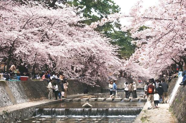 「さくら名所100選」にも選ばれた桜並木が楽しめる