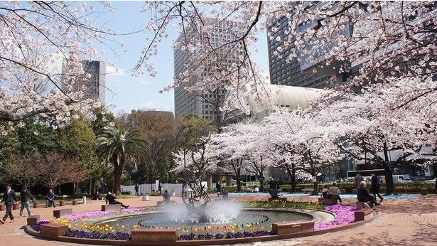 ビジネス街にある都会のオアシスでは、四季折々に咲く花々と桜が同時に楽しめる