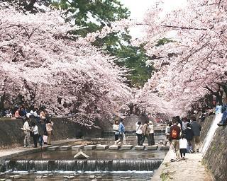 全国の桜・花見が楽しめる公園10選