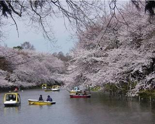 東京都の桜・花見が楽しめる公園10選