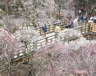 【コロナ対策付き】静岡で2月に行きたいおすすめイベント3選