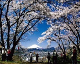 神奈川県の桜・花見が楽しめる公園10選