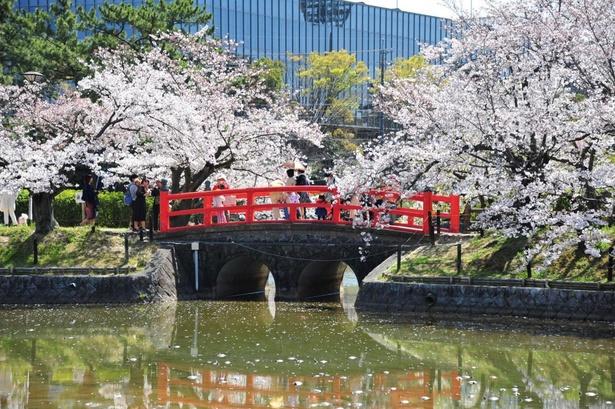 見どころの城池沿いなど、園内には約400本の桜が咲く