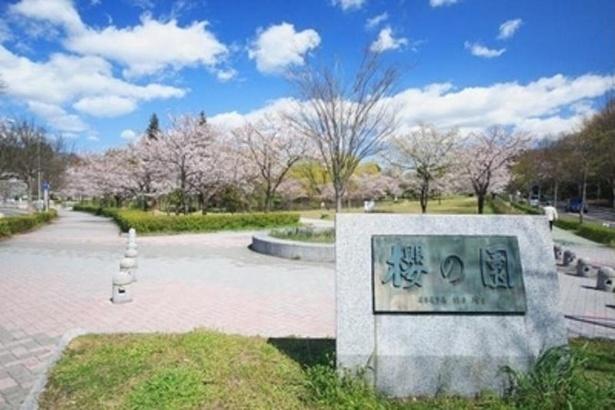 園内には桜の園と名付けられた場所がある