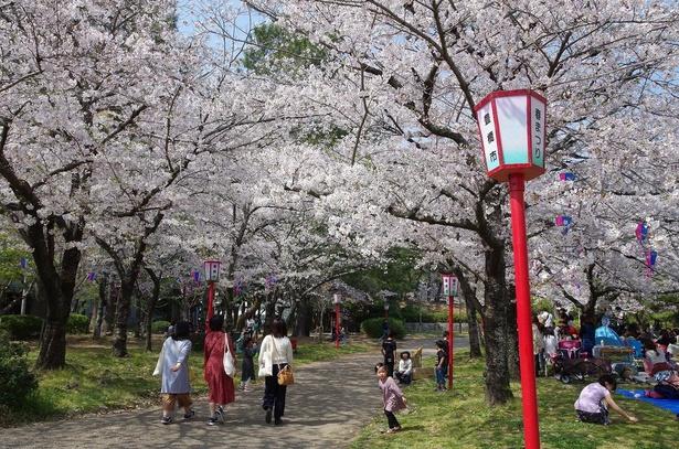 園内には散策や宴会を楽しむ花見客が訪れる