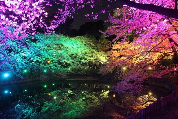 大池公園の池に映る夜桜