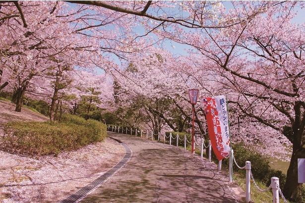 ピンクの花のトンネルを楽しめる