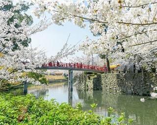 愛知県の桜・花見が楽しめる公園10選