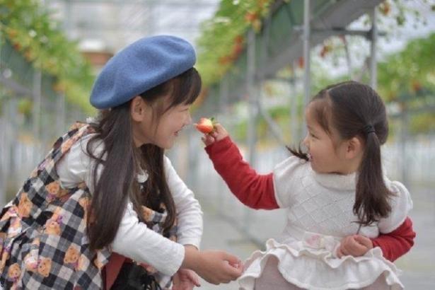 白いちごやピンクいちごを食べられる / BERRYPARK いずみ野