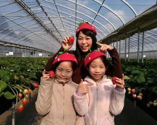 16品種のいちごを食べ比べ、千葉県千葉市のドラゴンファームで「いちご狩り」が開催中
