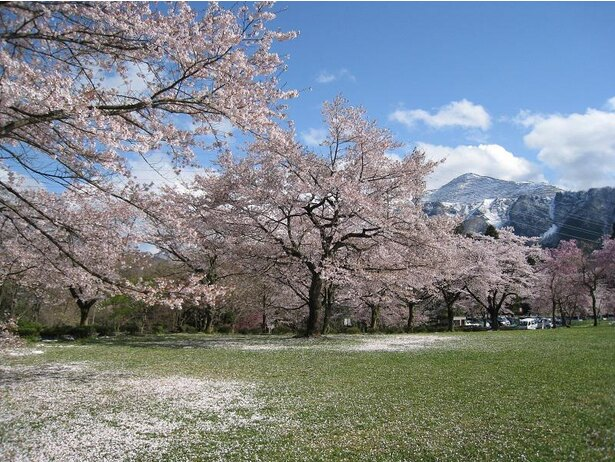 秩父のシンボル武甲山と芝生広場の桜