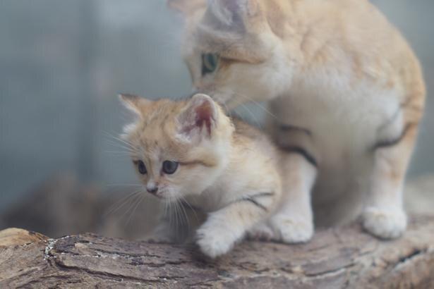 自然哺育ならではの仲睦まじい姿を眺めよう