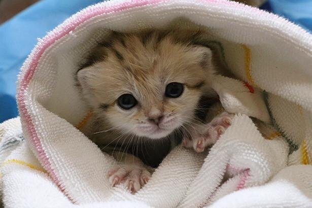 クリクリの目が最高にキュートな赤ちゃん時代のキサク