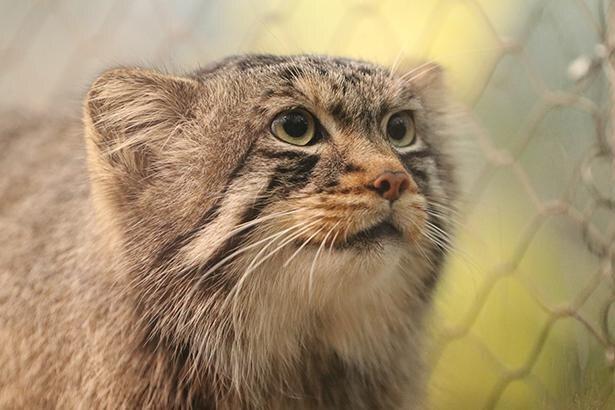 アズと共に過ごしてきた兄弟の「エル」は、繁殖のため東山動物園へお引越し