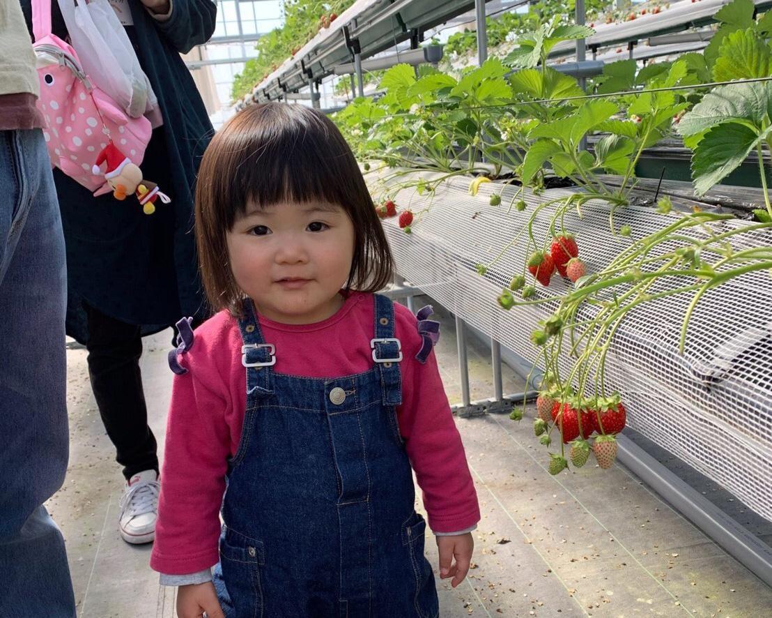 快適ハウスでいちごの食べ比べ、佐賀県佐賀市の佐賀ベリーフォレストで「いちご狩り」開催中
