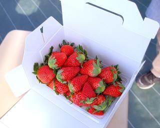 道の駅でおいしいいちご、千葉県東金市の道の駅 みのりの郷 東金で「いちご狩り」が開催中