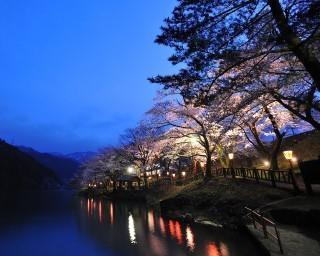 種類豊富な桜が楽しめる、富山県砺波市「庄川水記念公園」の桜の見頃は?