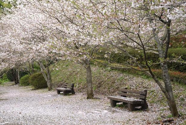 【写真】小城藩鍋島家が築いた歴史ある公園で桜を楽しもう