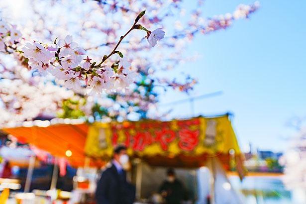 コロナ禍で迎える2度目の花見シーズン