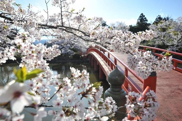 相馬の桜フォトコンテスト優秀賞受賞作「橋の髪飾り」