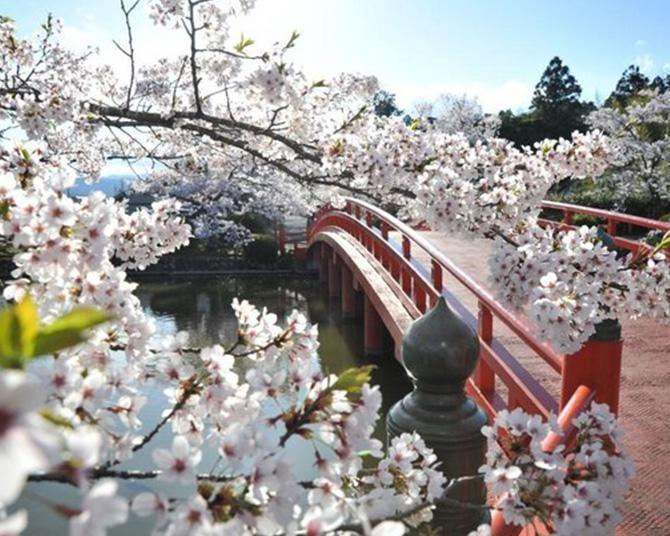 相馬随一の桜の名所、福島県相馬市の涼ヶ岡八幡神社の桜の見頃はいつ?