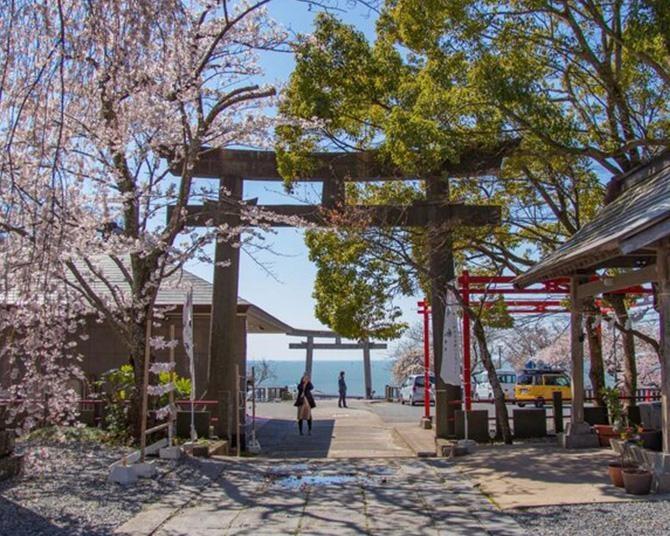 江戸時代から知られる桜の名所、宮城県石巻市の日和山公園の桜の見頃はいつ?