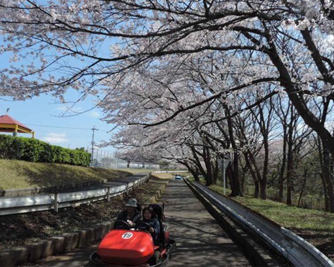 ゴーカートに乗って桜のトンネルを走ろう、千葉県市原市の「千葉こどもの国KidsDom」の桜の見頃はいつ?