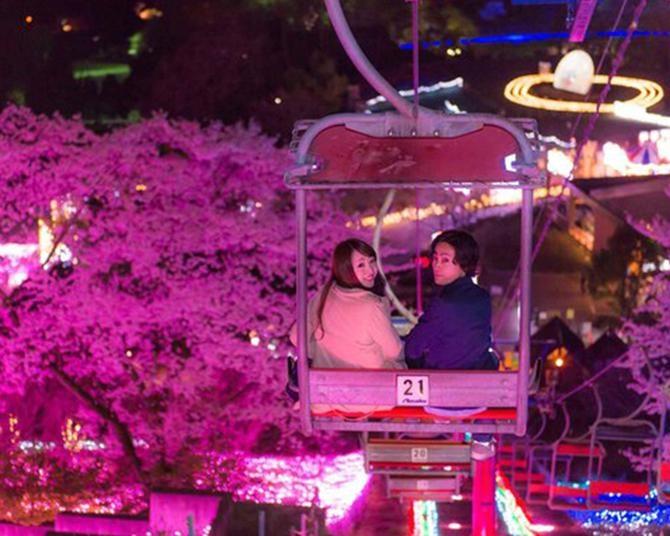 100万枚の桜吹雪、神奈川県相模原市のさがみ湖リゾートプレジャーフォレストで「さがみ湖桜まつり」が開催