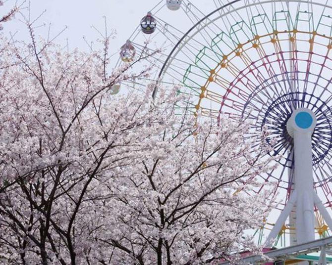 サンリオにも春の訪れ!大分県日出町のハーモニーランドの桜はいつが見頃?
