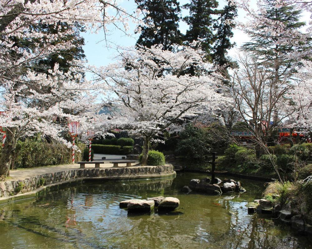 日本のさくら名所100選にも選ばれた山陰随一の名所、鳥取県倉吉市の打吹公園の桜はいつが見頃?