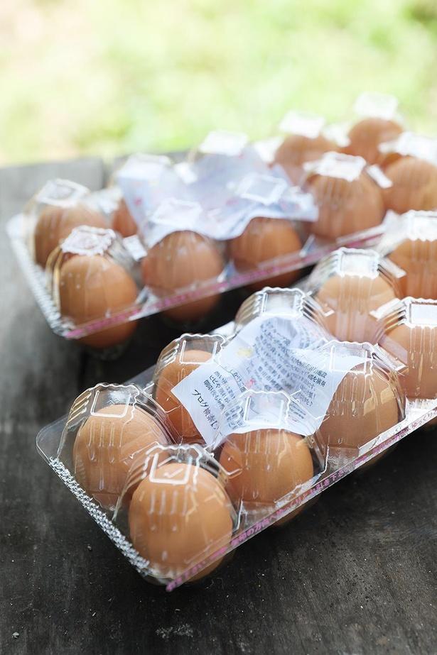 産みたての卵を持ち帰ろう。ニワトリとの触れ合いも楽しい!
