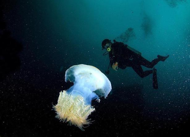 房総半島にはダイビングスポットが集中している。写真は館山市坂田の海(水深10〜15メートルの様子)