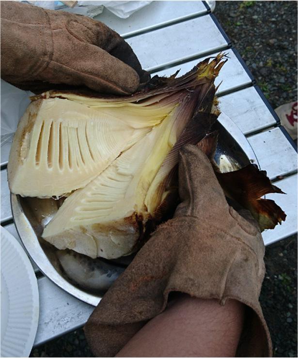 焚き火で焼いた筍は格別のおいしさ